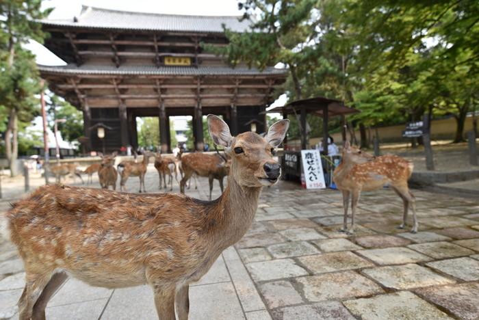 Japan/Kansai Nara Park